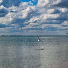 Пливуть за обрій хмари, до Одеси
