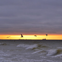 Silhouetted ships and flying seagulls at sunrise