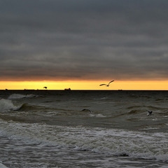 Silhouettes of ships and gulls