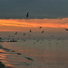 Flight of seagulls at sunrise