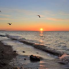 Dance of seagulls at sunrise