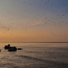 Birds and fishermen