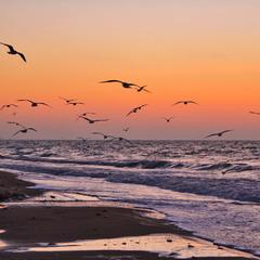 Seagulls at dawn