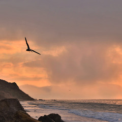 Seagull Flying at Dawn