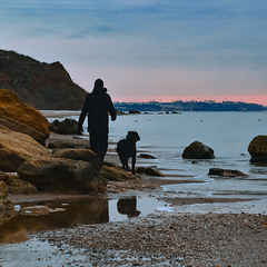 Dog on morning walk at beach with owner.