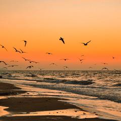 Чайки на світанку