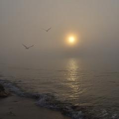 Foggy morning at sea