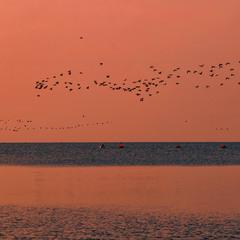 Fishermen and birds at sunrise