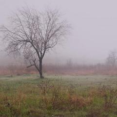 Квітневий туман