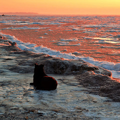 The dog is watching the dawn