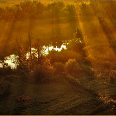 Огородики в роще ранним утром