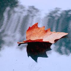 Осенний лист...