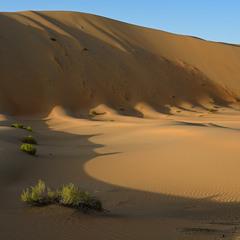 Тени пустыни