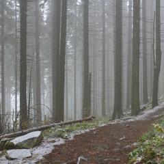 Наодинці з лісом