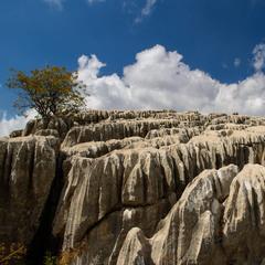 И на камнях растут деревья...