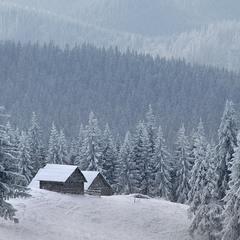 У сніжному полоні