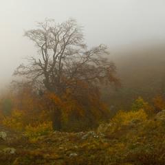 Одинокая осень