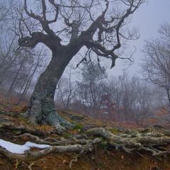 Повелитель леса
