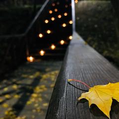 Вечерний октябрь...