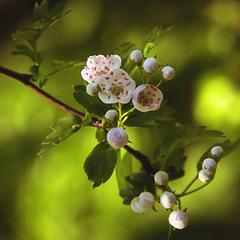 Прийшла весна, все квітне