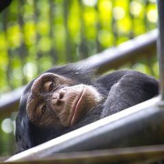 В зоопарку