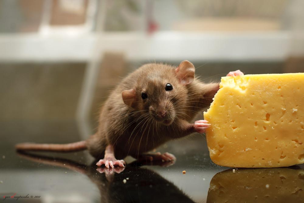 фото мышек смешные тратим деньги телевизионную