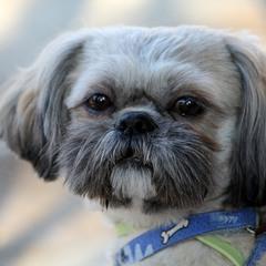Собакин портрет
