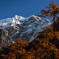 Осень в Гималаях...