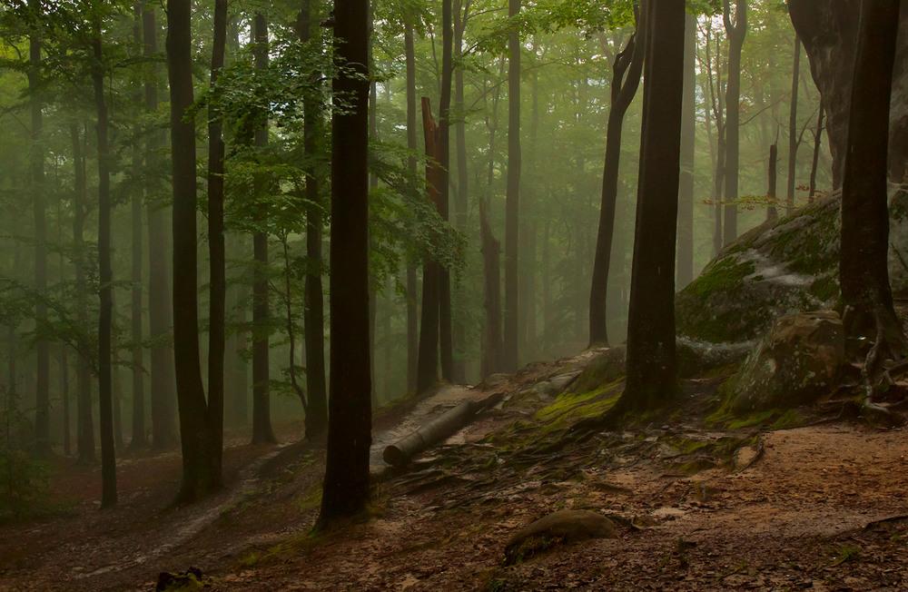 фото в лесу после дождя это
