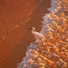 Бегущая от волны.