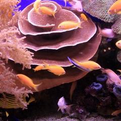 Кораллы Красного моря.