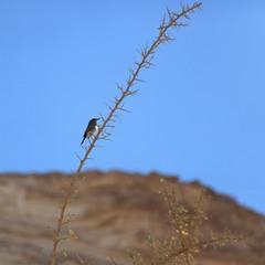 Птичка - невеличка.