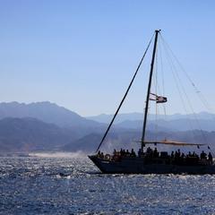 Пираты Карибского моря.
