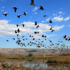 Снова птицы в стаи собираются, ждёт их за моря дорога дальняя...