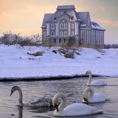 Swans & Temple
