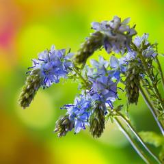 Цветущие весной