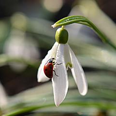 Вітаю з весною