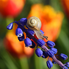 Квітне квітень