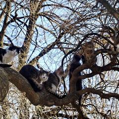 Весна. Коты прилетели.