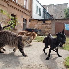 Коты и пёс