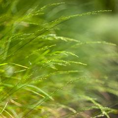 ... Only grass...