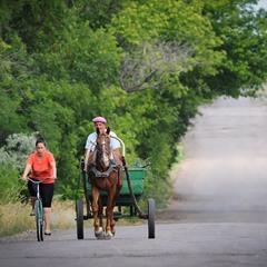 Одне кохання, два коня...