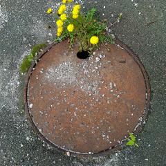 весна на планеті Залізяка