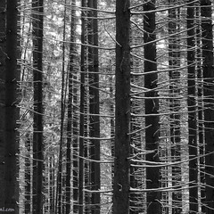 Контури лісу