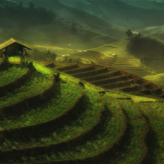 Rice terraces *