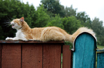 кошачьи гримасы