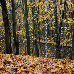 Осень в этюдах