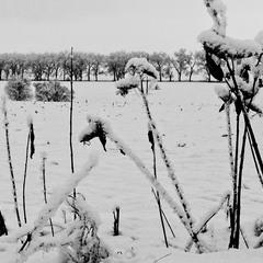 ч.б.зима-2
