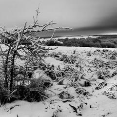 черно-белая зима...