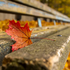 перспективная осень